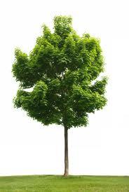 Mr Tree's Photo